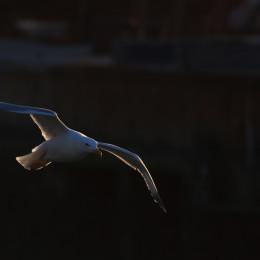Voglia di volare
